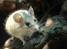 The spiny mouse is awesome so shut your dumb face.